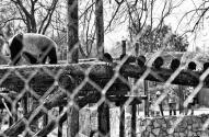 北京动物园140余种动物室外迎客 你想去看看吗?